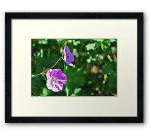 Sunning my Pedals Framed Print