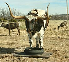 Meanwhile, back at the Ranch . . . by Susan Russell