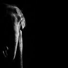 Elephant by KatsEyePhoto
