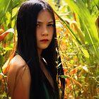 the cornfield by Rebecca Tun