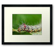 Hairy Caterpillar Framed Print