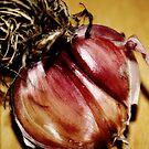 Organic Local Garlic by beekokweh