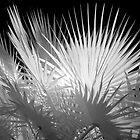 Spikes - Infrared by Hans Kawitzki