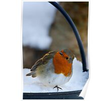 Robin in snow, The Rower, County Kilkenny, Ireland Poster