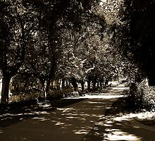 Park in Bendigo by Andrew (ark photograhy art)