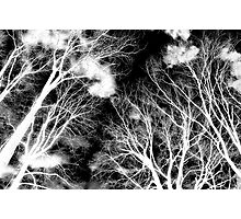 Ghostly Giants Photographic Print
