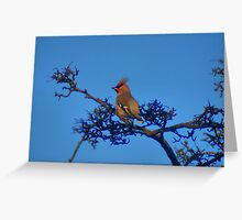 Waxwing - In Bradford City! Greeting Card