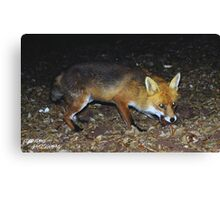 Fluffy The Fox Canvas Print