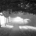 Foggy Morning On Tooting Bec Common by Brian Sharland