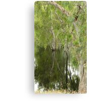 FLOODED FOREST NSW Canvas Print