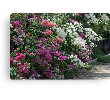 Bougainvillea of Many Colours Canvas Print