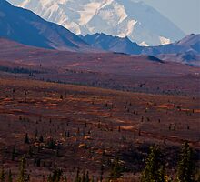 Fall In Denali National Park - Alaska by Melissa Seaback