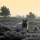 Sheep In a Frozen world by ienemien