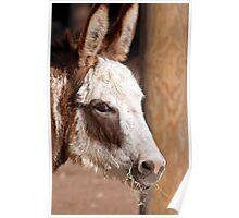 Donkey Nose Poster