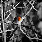 Robin by Mike Higgins