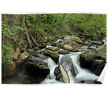 A stream that is fed by Anna Ruby Falls  Poster