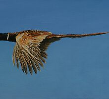 Pheasant by David McEwen