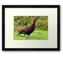 Grouse #2 Framed Print