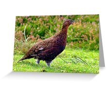 Grouse #2 Greeting Card