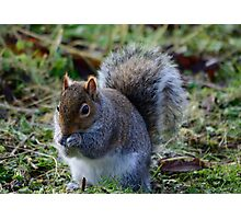 A Beautiful Grey Squirrel Photographic Print