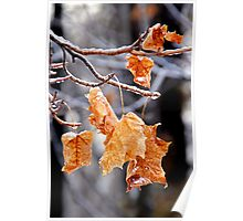 After the Freezing Rain 4 - Leaves Poster