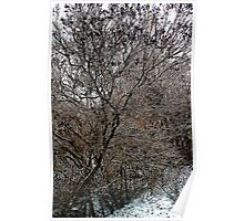 After the Freezing Rain 5 - Lilac Tree Poster