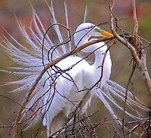 Egret Building a Nest by imagetj