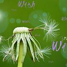 Make a Wish Card by Lisa Knechtel