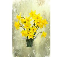Daffodils in springtime Photographic Print