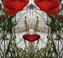 Holding the mirror up to poppies by Lucy1958
