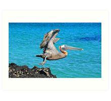 Galapagos Islands, Ecuador Art Print