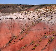 Painted Desert by Frank Romeo