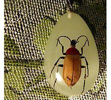 bug pendant on pashmina Photographic Print