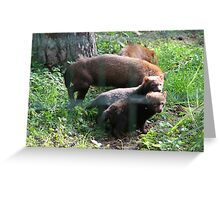 Super Bush Dog Greeting Card