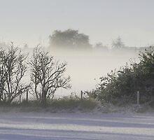 mist after snow fall by pamtrezise