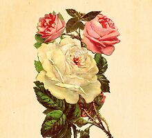 Roses by Claire Dimond