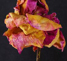 Withered, But Still So Beautiful by David McMahon