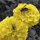 bee selective by Brock Hunter