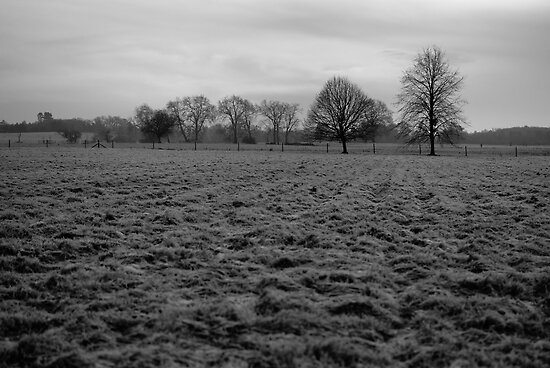 Croome Park by Matthew Walters