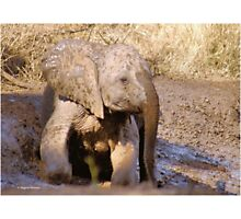 BABY ELEPHANT MUDBATH - SERIES: # UP CLOSE AND PERSONAL WITH ELPHANTS Photographic Print