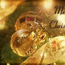 glimpse of the season by Rachels  Reflections