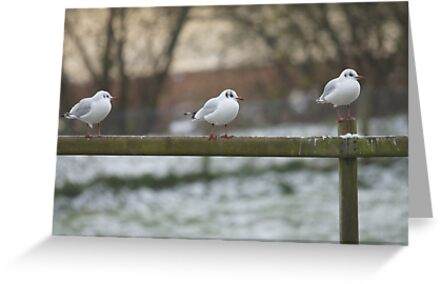 Seagulls Getting Ready for a Cold Night Ahead by MendipBlue