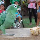 a very talented parrot. by Amanda Huggins