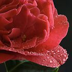 Red Camelia by Ann Garrett