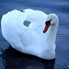 Swan of the Lake by shauncompton