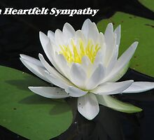 Comfort series: Heartfelt Sympathy (water lily) by hummingbirds