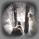 Kitty Wonderland by hickerson