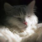 A Late Morning Nap by Kent Burton