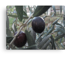 The olives ... Canvas Print
