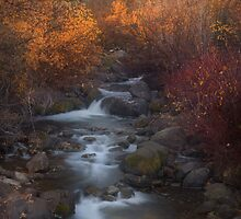 Brush Creek vert by Steve  Taylor